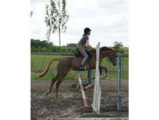 14. 2hh Chesnut Mare 6yo Event Or Pc Prospect