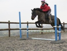 All Rounder horse - 6 yrs 14.0 hh Bay - Cornwall