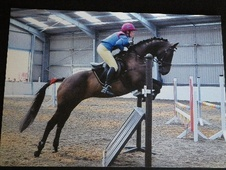 All Rounder horse - 10 yrs 16.0 hh Bay - Lincolnshire