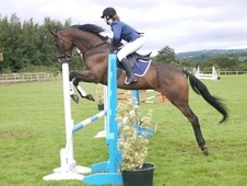 Eventers horse - 12 yrs 1 mth 16.2 hh Bay - Mid Glamorgan