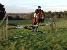 Stunning 14. 2hh Mare- Lovely Hack, Loves Jumping