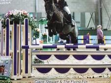 Fabulous all-rounder pony for sale