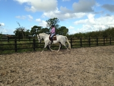 Reduced IDxTB Grey Gelding