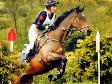 Woody, 16. 1h, Thoroughbred, 18 years, Gelding - Oxon/Bucks