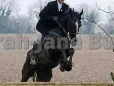 All Rounder horse - 4 yrs 16.0 hh Black - Gwent