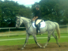 All Rounder horse - 15 yrs 16.0 hh Grey - North Yorkshire