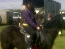 Pony Club Ponies horse - 4 yrs 1 mth 12.0 hh Black - West Yorkshire