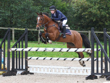Talented Warmblood For Sale