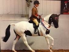 Qualified Hoys 2014 Sold With Ride