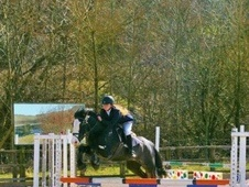 All Rounder horse - 7 yrs 14.2 hh Black - Cumbria