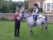 Lead Rein & First Ridden horse - 5 yrs 10.0 hh Blanket Spot - Nor...
