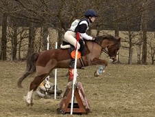 All Rounder horse - 9 yrs 11 mths 12.2 hh Chestnut - East Sussex