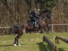 All Rounder horse - 4 yrs 11 mths 15.3 hh Brown - Kent