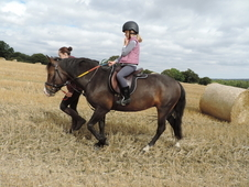 13. 2 All Rounder Childs Pony