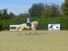 Seriously Talented Palomino For Sale.