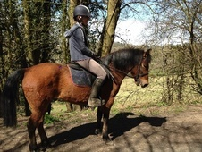 13.2hh New Forest for loan! - East Sussex