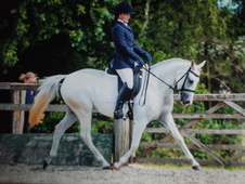 Fantastic Dressage Pony
