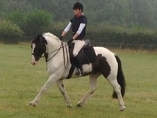 Fun All Rounder Cob