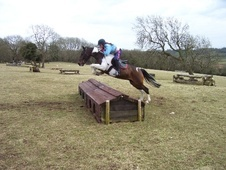 All Rounder horse - 10 yrs 5 mths 14.0 hh Skewbald - Mid Glamorgan
