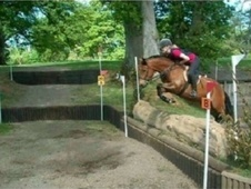Showing horse - 5 yrs 13.2 hh Bay - Somerset