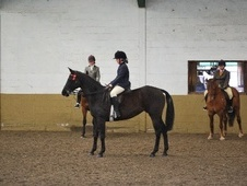 Part Bred horse - 15 yrs 15.1 hh Black - Cheshire
