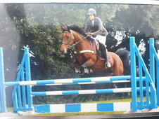 Talented 148 Jumping Pony