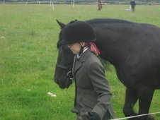 13 2 Registered Fell Pony For Sale