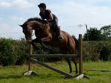 All Rounder horse - 6 yrs 15.3 hh Bay - North Yorkshire