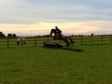 14. 2hh, Alrounder For Sale