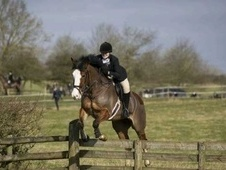 All Rounder horse - 6 yrs 15.3 hh Brown - Gloucestershire