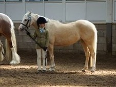 Stunning Reg Section B Palomino Mare