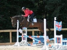 Eventers horse - 6 yrs 2 mths 16.0 hh Bay - Wiltshire