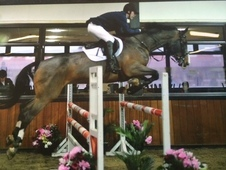 Talented Showjumper With Big Prospect Ideal Hunter