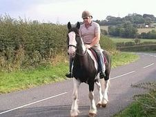 Great Family Cob!! 15. 1h Gelding £1700