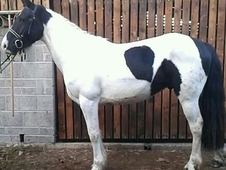 16. 1hh Untapped Potential Ode/ror/teens