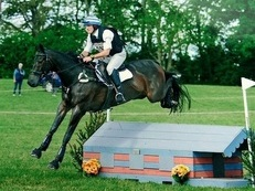 Fantastic Intermediate Event Horse