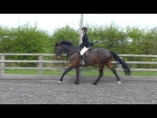 Beautiful Irish Sport Horse With Plenty Of Dressage Potential - ...