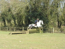 16hh, Blue roan gelding. 7 years old