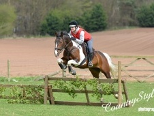 Coloured horse - 5 yrs 4 mths 15.2 hh Coloured - Shropshire