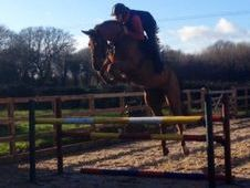 All Rounder horse - 5 yrs 16.1 hh  - Kent