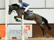 Show Jumpers horse - 6 yrs 16.2 hh Dark Bay - Essex