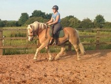 Palomino Gelding For Sale