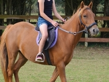 Sweet Natured Childs Pony For Sale