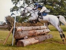 14. 3/15hh event/pony club/ all rounder pony