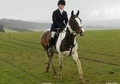 All Rounder horse - 15 yrs 16.0 hh Skewbald - Gloucestershire