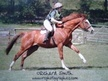 All Rounder horse - 8 yrs 10 mths 16.0 hh Chestnut - Buckinghamshire