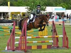Showjumping Prospect For Sale