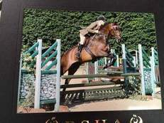 TOP CLASS ESTABLISHED SMALL RIDING HORSE / INTERMEDIATE/WORKER SOLD WITH RIDE AT RIHS 2017