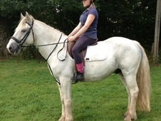 All Rounder horse - 5 yrs 11 mths 15.0 hh Blue & White - Warwicks...