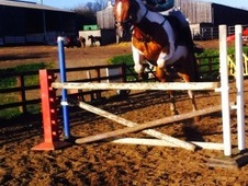 Show Jumpers, Horse